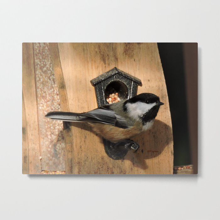 Black-Capped Chickadee at the Feeder Metal Print