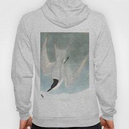 Marsh tern, Birds of America, Audubon Plate 410 Hoody