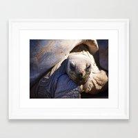 tortoise Framed Art Prints featuring Tortoise by Jenna Boettger Boring