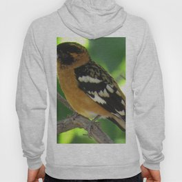 Black Headed Grossbeak Hoody