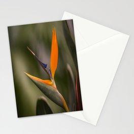 Singing Bird Stationery Cards