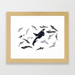 Dolphins all around Framed Art Print