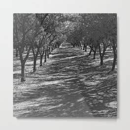 Black & White Almond Orchard Pencil Drawing Photo Metal Print