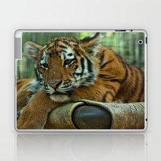 Baby Tiger Laptop & iPad Skin