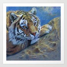 Tiger on the rock CC117 Art Print