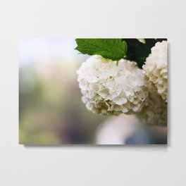Snowball In Summer Metal Print