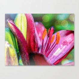 Blooming Tulip Canvas Print