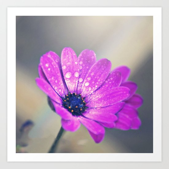 Sunshine flower purple Art Print