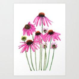 pink coneflowers watercolor Art Print