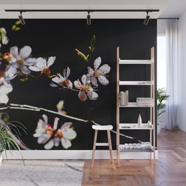 Impressive, Elegant Japanese Apricot Flowers Against The Black Background Wall Mural