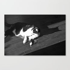 Relaxing Cat Canvas Print