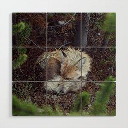 Sleeping Fox Wood Wall Art