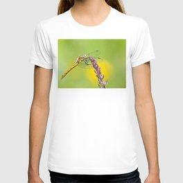 "Yellow dragonfly ""Sympetrum striolatum"" T-shirt"