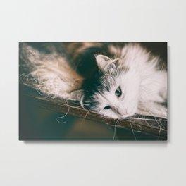 Domestic cat animal laying on table Metal Print