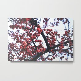 Cranapple Tree Metal Print