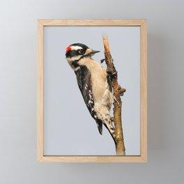 Busy Downy Woodpecker Whittling Pear Tree Wood Framed Mini Art Print