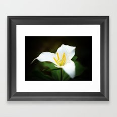 Flower photography Trillium Flowers Nature photography Framed Art Print