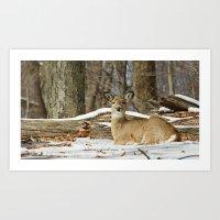 Alert Deer Art Print