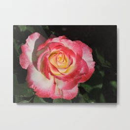 Multi-Hued Rose Metal Print
