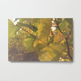 Early Fall Metal Print