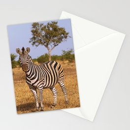 Zebra in Africa, wildlife Stationery Cards