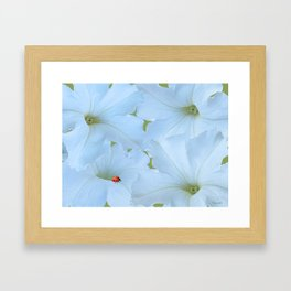 Petunias Petunias Framed Art Print