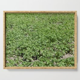Agriculture texture of fields and beds Serving Tray