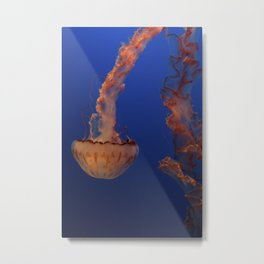 Sea Nettle Metal Print