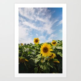 Rise to the sunshine Art Print