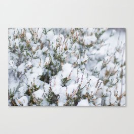 White Winter Hymnal Canvas Print