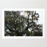 Sunlight Through The Oak 3 Art Print