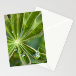 Lupin after rain 5111 Stationery Cards