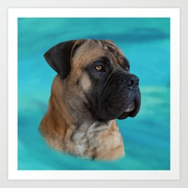 Boerboel - South African Mastiff Art Print