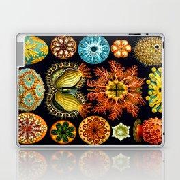 Sea Squirts (Ascidiacea) by Ernst Haeckel Laptop & iPad Skin