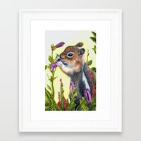 charmaine Framed Art Prints featuring Chipmunk eating a flower print by Charmaine Diedericks