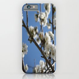 Cherry Blossom Branches Against Blue Sky iPhone Case