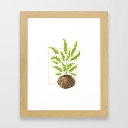 Bluestar Fern Illustration Framed Art Print