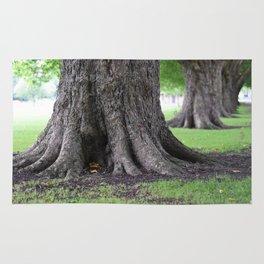 Cambridge tree 4 Rug
