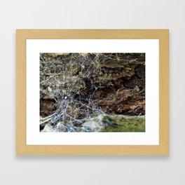 webs1a Framed Art Print