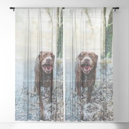 Cute puppy by Mike Baker Sheer Curtain
