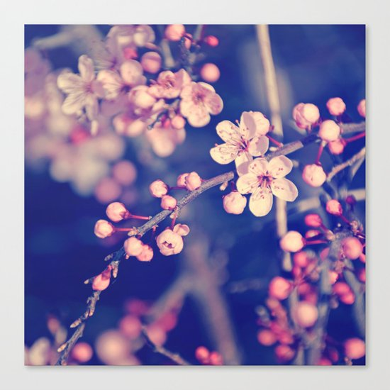 Gentle Rose Cherry Blossom Canvas Print