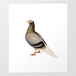 Le Pigeon Art Print