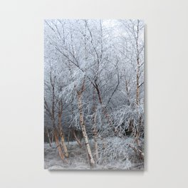 Frosty Trees in Winter Snow Metal Print