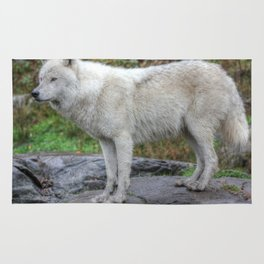 Arctic Wolf HDR Rug