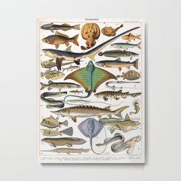 Adolphe Millot - Poissons A - French vintage nautical poster Metal Print