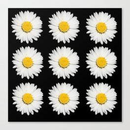 Nine Common Daisies Isolated on A Black Backgound Canvas Print
