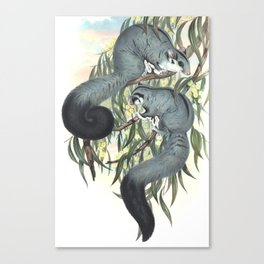 Sugar Glider in the forest of Australia and USA Canvas Print