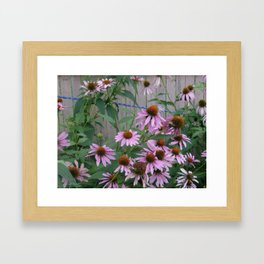 Coneflowers In Brush Strokes Framed Art Print