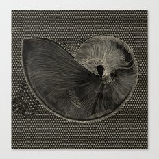 SEASHELL IN BLACK Canvas Print