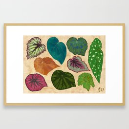 Begonias Framed Art Print